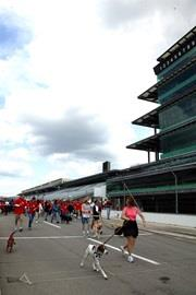 inaugural Mutt Strut at the Indianapolis Motor Speedway.
